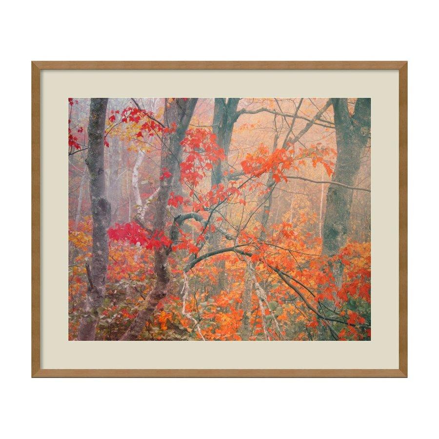 Amanti Art 33.41-in W x 28.04-in H Framed Maple Trees In Fog Near Eagle Lake, Acadia National Park Wall Art Print