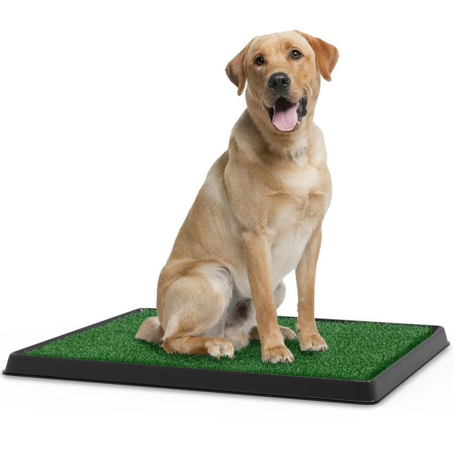 Pet Pal Artificial Turf Plastic In The Puppy Training Pads Department At Lowes Com