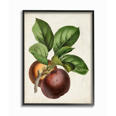 Vintage Fruit Painting Wall Art At Lowes Com