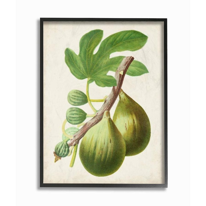 Stupell Industries Vintage Fruit Fig Painting Framed 14 In H X 11 In W Vintage Retro Wood Print In The Wall Art Department At Lowes Com