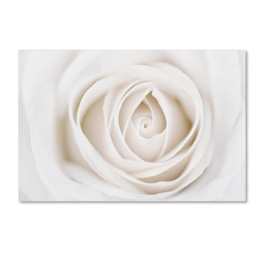 Trademark Fine Art Floral Framed 16 In H X 24 In W Floral Canvas Print In The Wall Art Department At Lowes Com