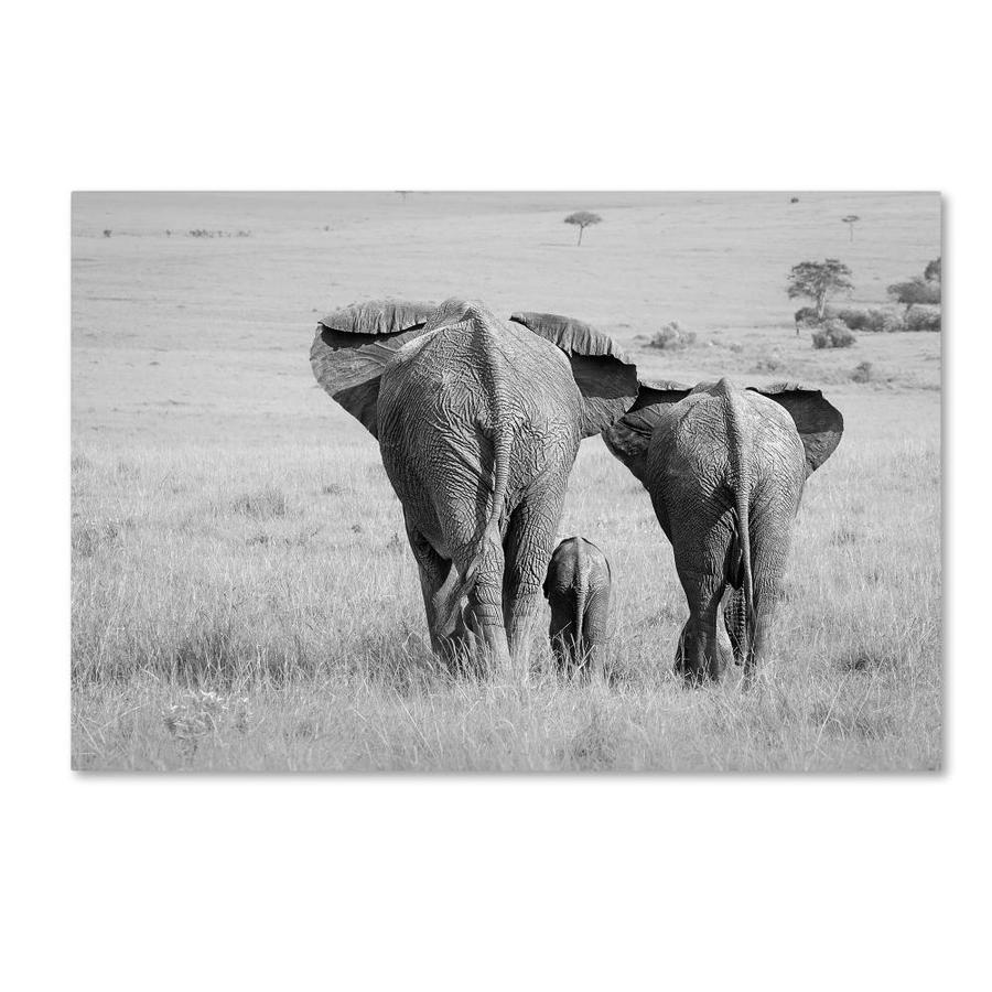 Trademark Fine Art Animals Framed 16 In H X 24 In W Animals Canvas Print In The Wall Art Department At Lowes Com