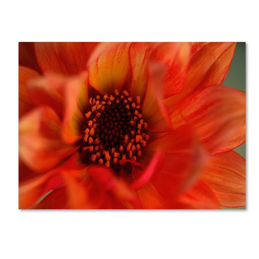 Trademark Fine Art Kathy Yates Fiery Dahlia 14x19 Canvas Art In The Wall Art Department At Lowes Com