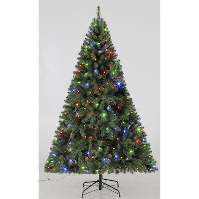 Living Christmas Tree.Hl 6 5 Ft 250 Ccl Seneca Tree