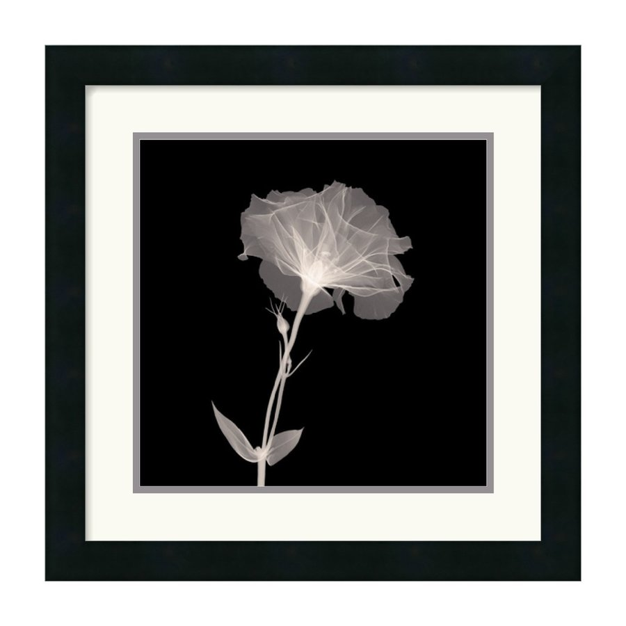 Amanti Art 18.19-in W x 18.19-in H Framed Wood Photography Prints Wall Art