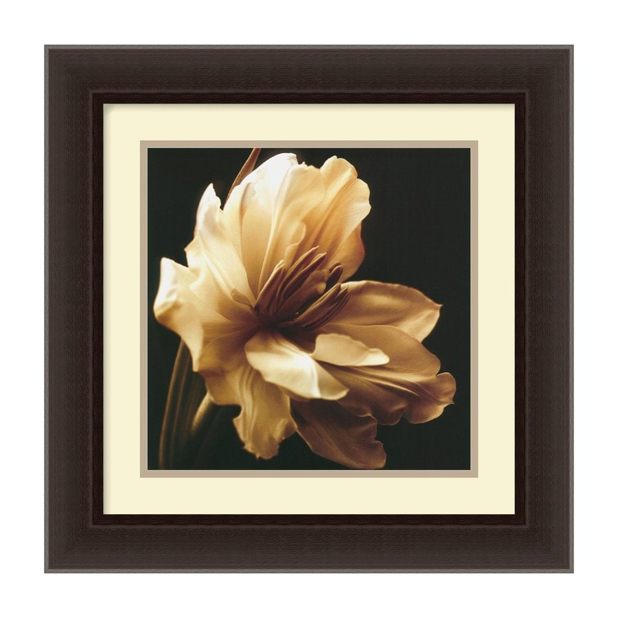 Amanti Art 17.84-in W x 17.84-in H Framed Paper Floral Prints Wall Art