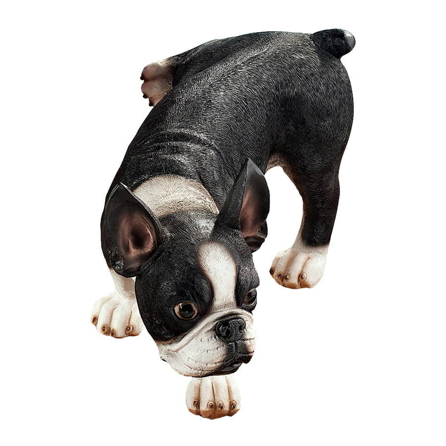 Design Toscano Lifting A Leg Naughty Boston Terrier 7-in Animal Garden Statue