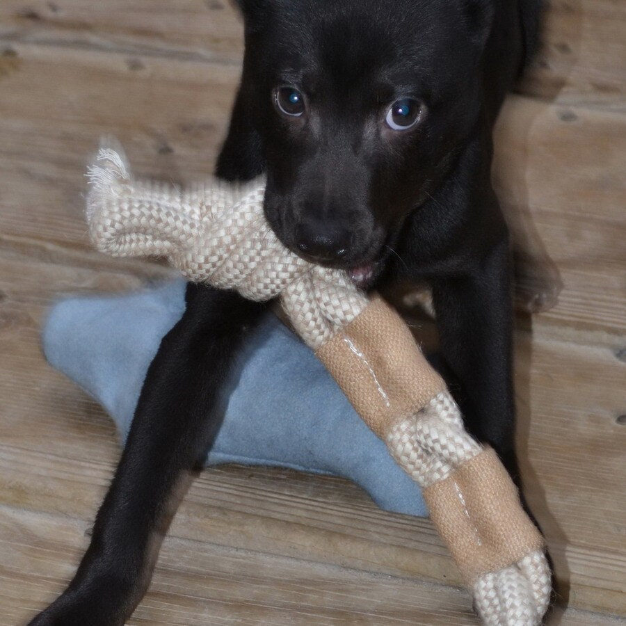 ABO Gear Fabric Tug/Rope Toy