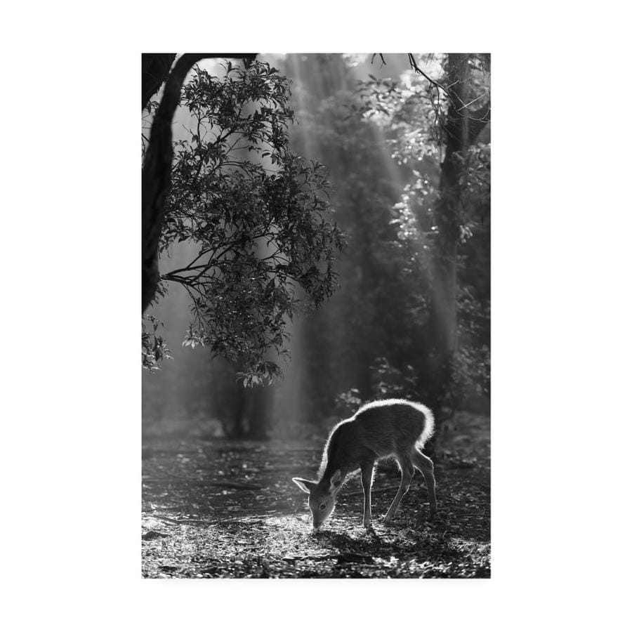 Trademark Fine Art Yoshinori Matsui A Fawn In The Forest 30x47 Canvas Art In The Wall Art Department At Lowes Com