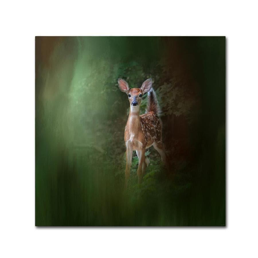 Trademark Fine Art Jai Johnson Woodsy Summer Fawn 35x35 Canvas Art In The Wall Art Department At Lowes Com