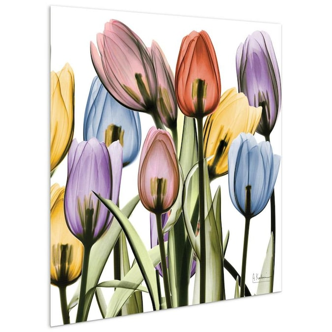 Empire Art Direct Wall Art 24 X 24 Tulip Scape X Ray Ii Flowers Frameless Free Floating Tempered Glass Panel Graphic Wall Art In The Wall Art Department At Lowes Com