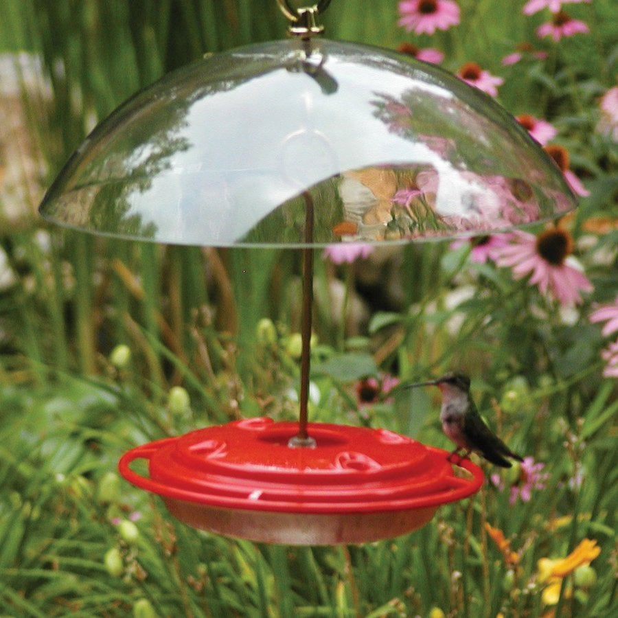 Shop Birds Choice Hummerdome Plastic Hummingbird Feeder At