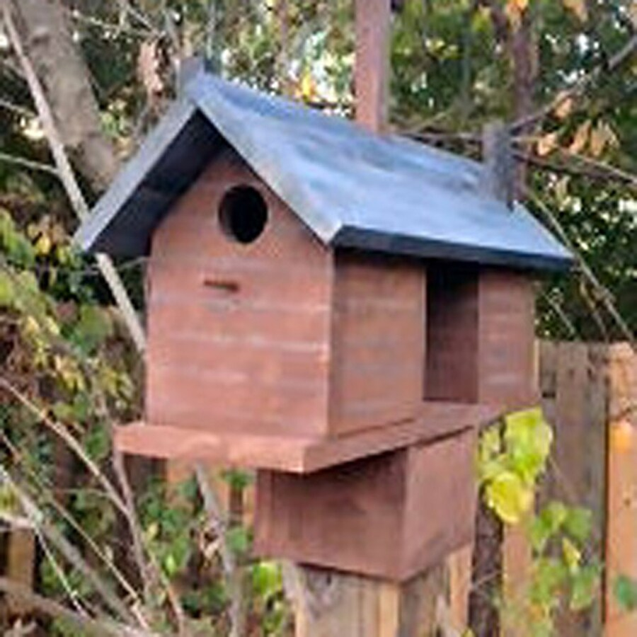 Wilderness Series Products 19-in W x 18-in H x 8-in D Rust/Black Bird House