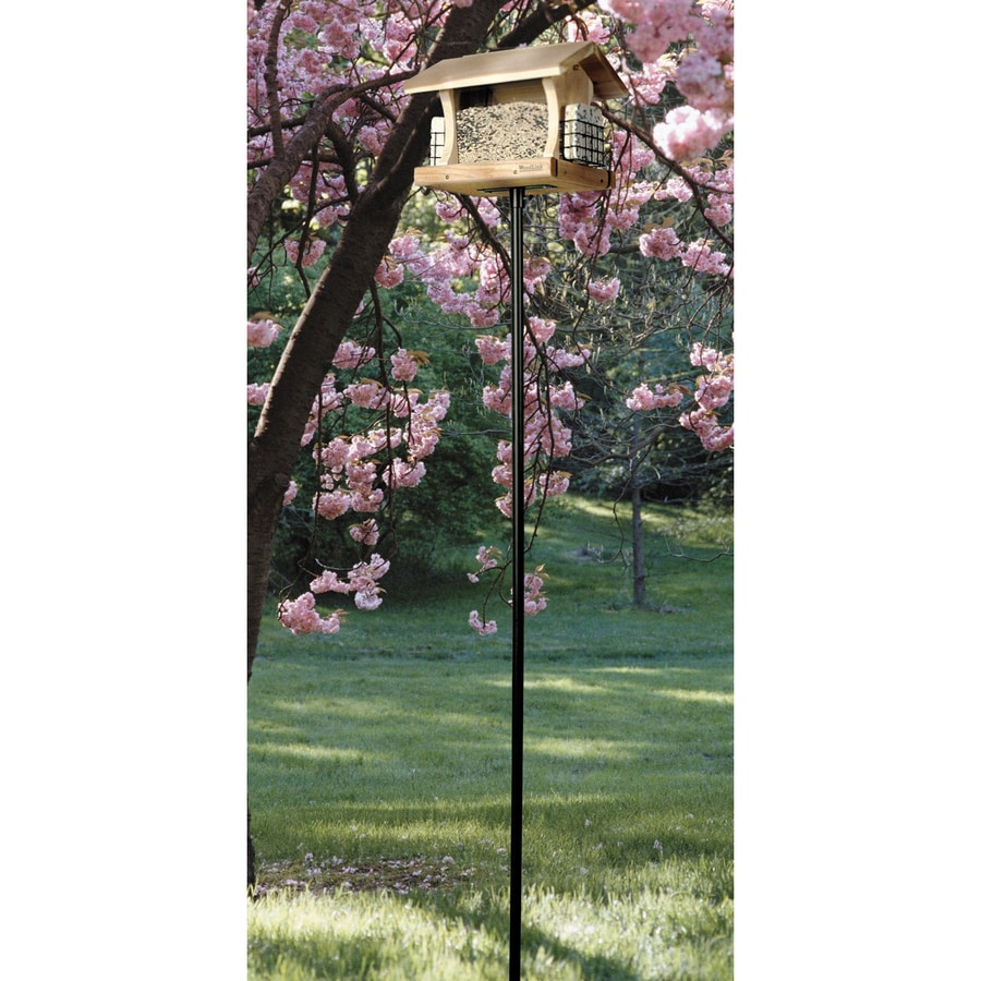 classic zoom feeder platform com eco bird mounted duncraft pole