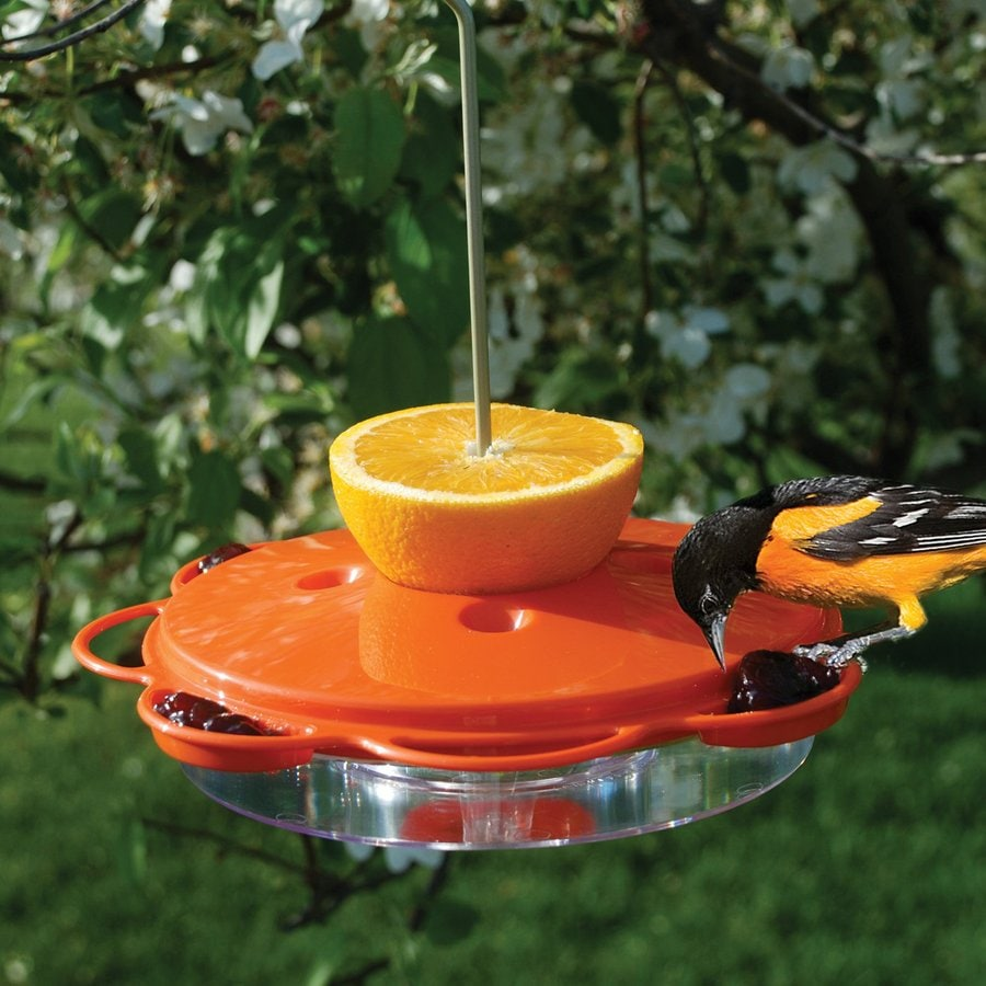Oriole Feeder Home Hardware