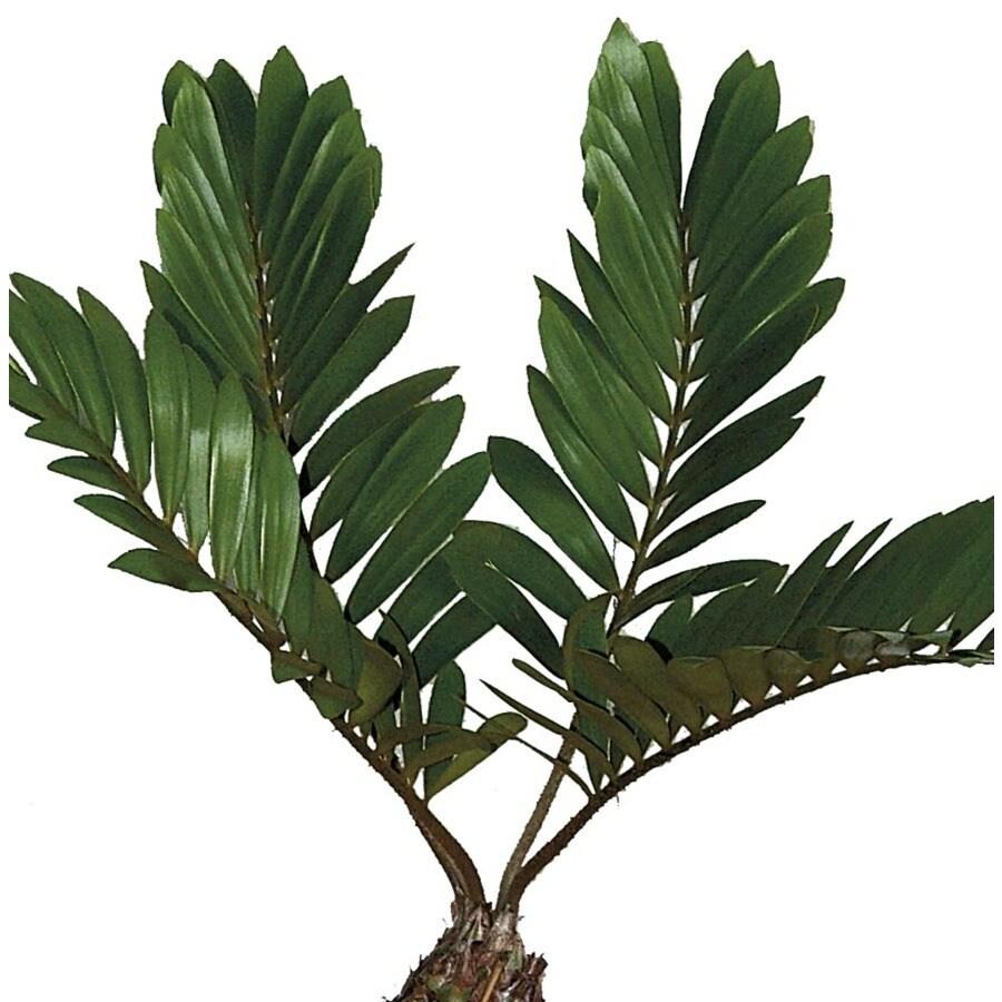 4.55-Gallon Cardboard Palm (LW02048)