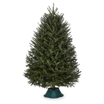 Lowes Christmas Trees 2021 7 8 Ft Fraser Fir Real Christmas Tree In The Fresh Christmas Trees Department At Lowes Com