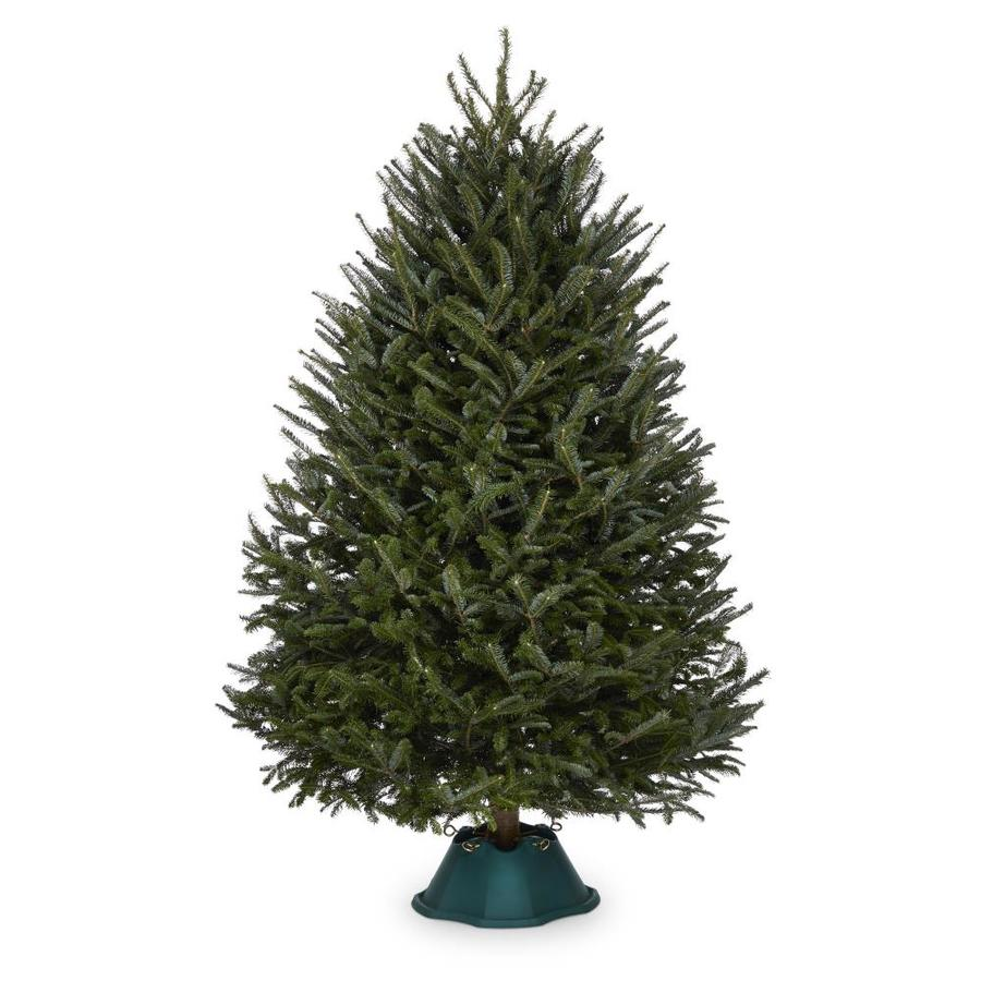 Shop 8-9-ft Fresh Fraser Fir Christmas Tree at Lowes.com