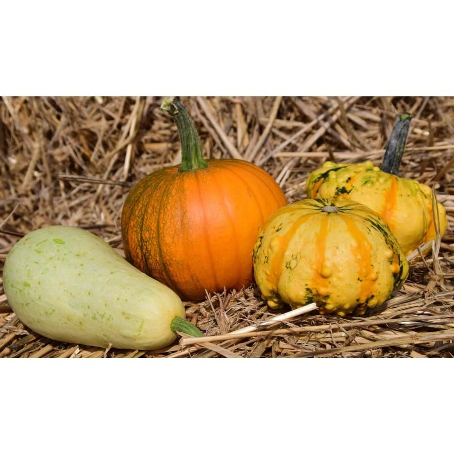 5-Pack Mixed Colors Gourd