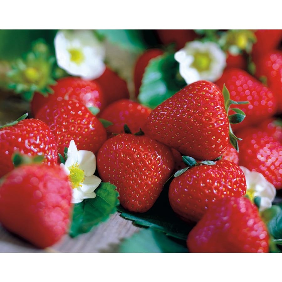 Garden State Bulb 15-Pack Sparkle Strawberry (LB21816)