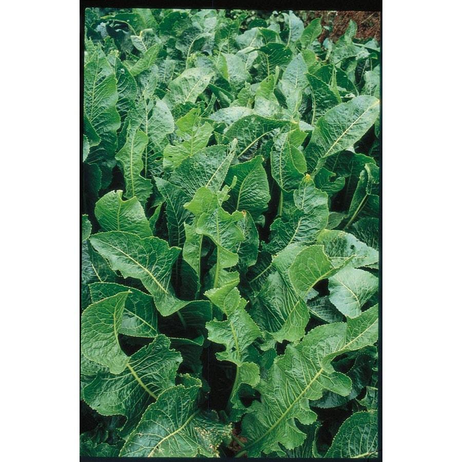 Garden State Bulb 2-Pack Horseradish Plant (L20402)