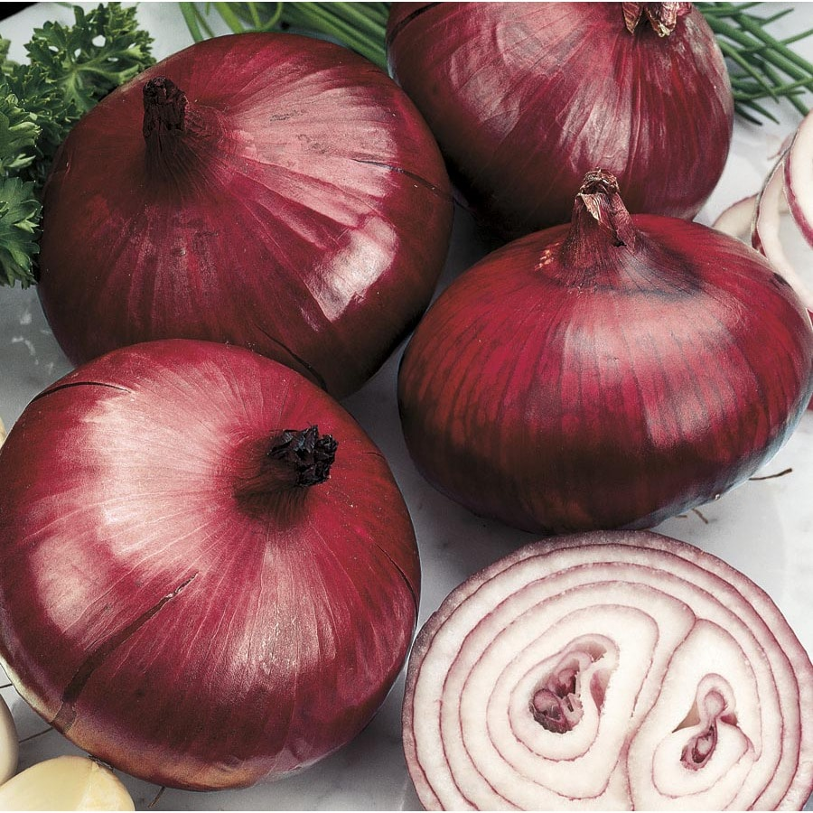 Garden State Bulb 75-Count Onion Red Baron Bulbs