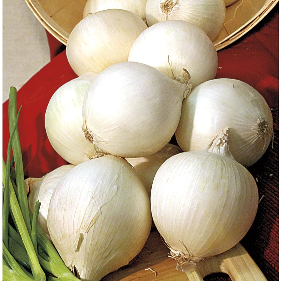 Garden State Bulb 75-Count Onion Snowball Bulbs