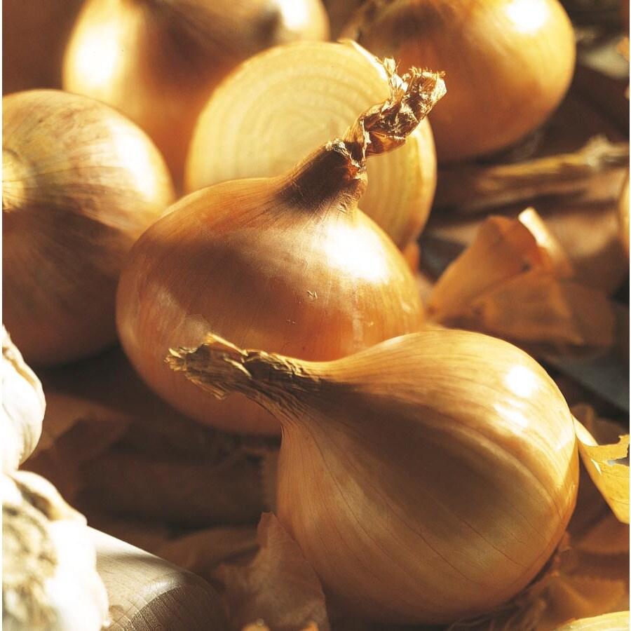 Garden State Bulb 75-Count Onion Stuttgarter Riesen Bulbs