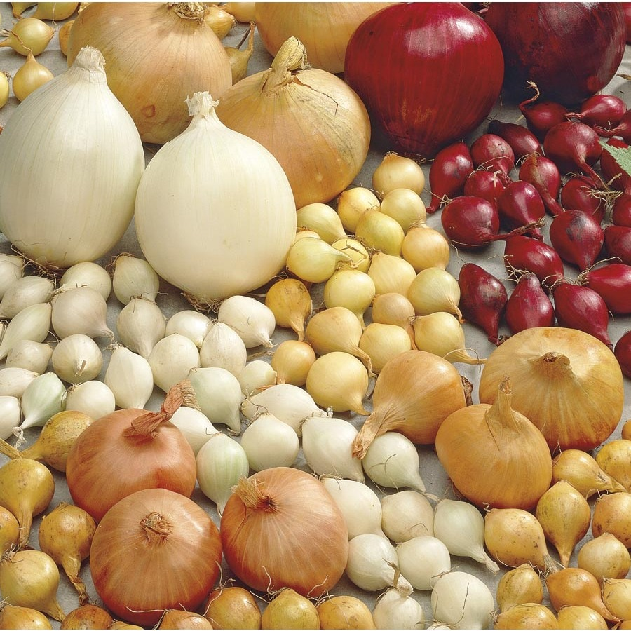Garden State Bulb 90-Pack Onion Sets