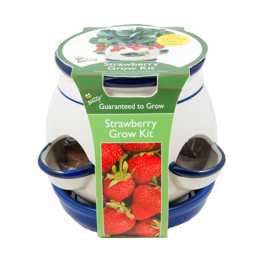 Buzzy Fruit Gardening Kit