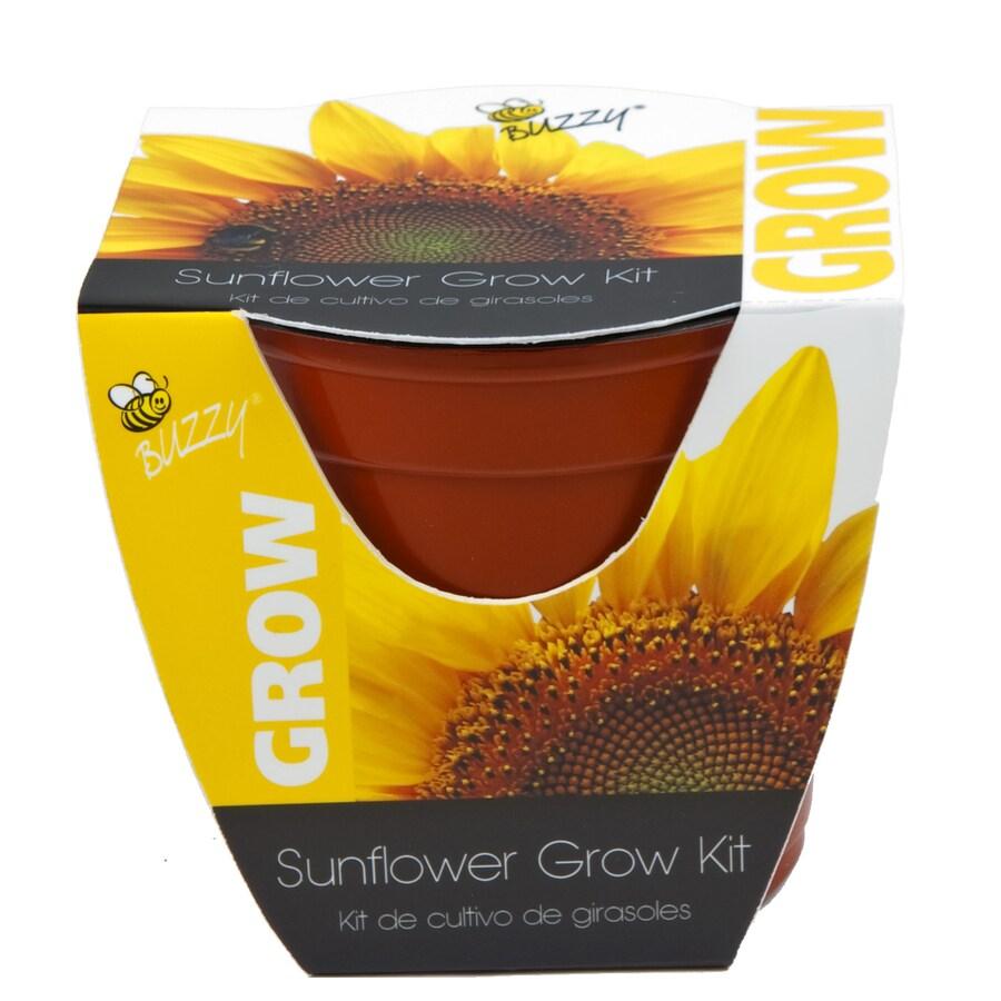 Buzzy Flower Gardening Kit