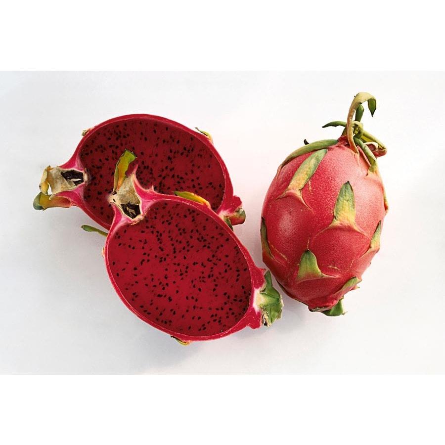 1.72-Gallon Dragon Fruit (Red Flesh) Small Fruit (L21823)