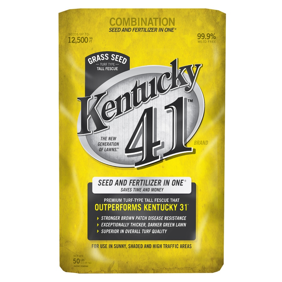 Kentucky 41 50 Lb Fescue Grass Seed