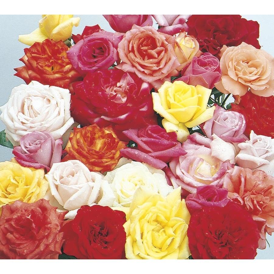2.5-Quart Rose (L6023)
