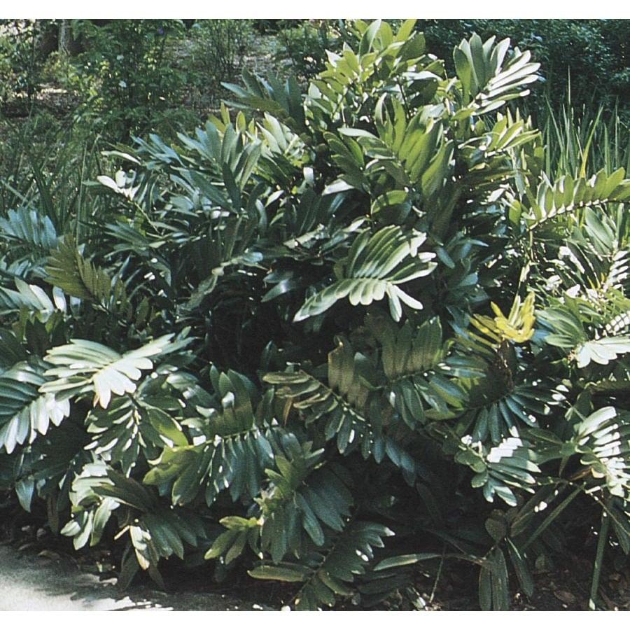 6.03-Gallon Cardboard Palm Feature Tree (L6926)