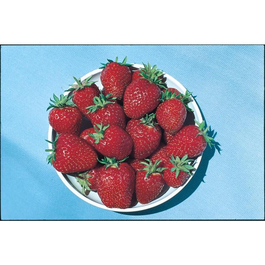 1.39-Pint Strawberry Small Fruit (L00574)