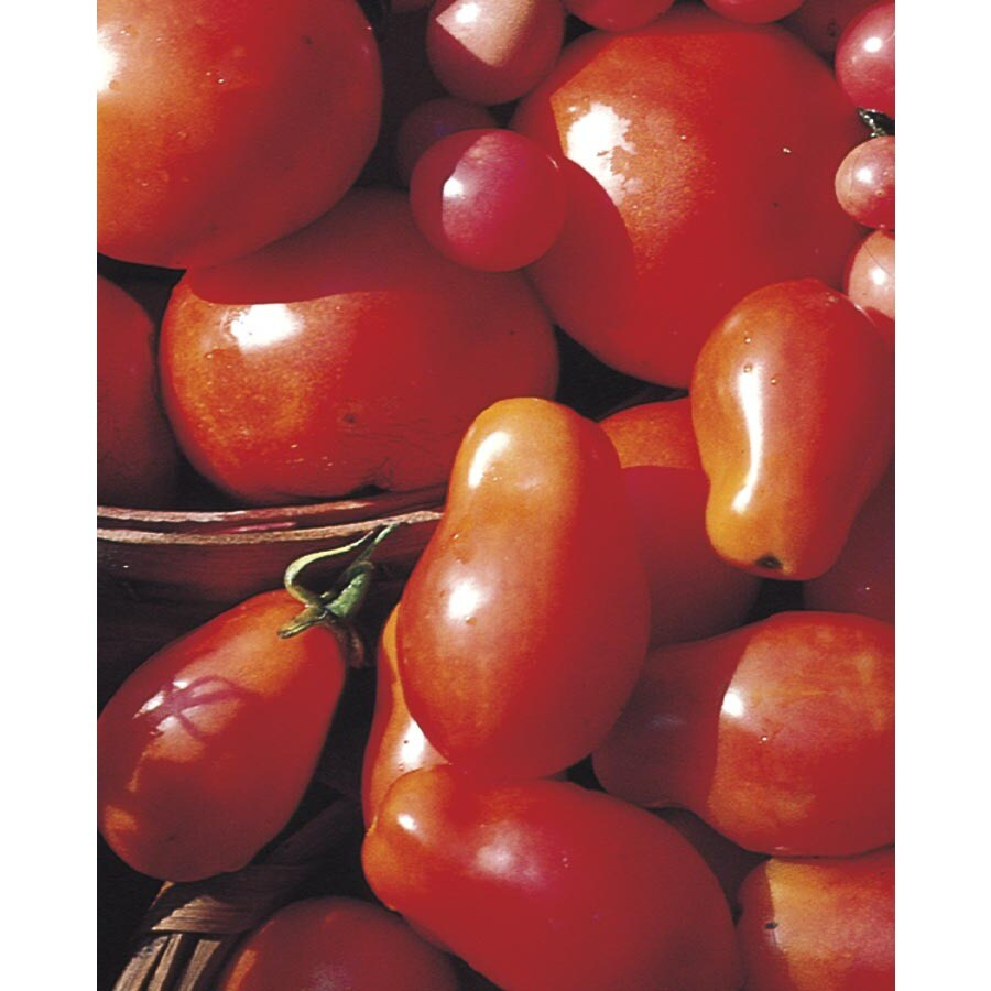 2.51-Gallon Tomato Assortment Plant (L14917)