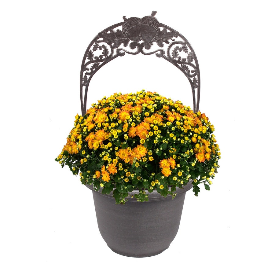 2-Gallon Planter Combo