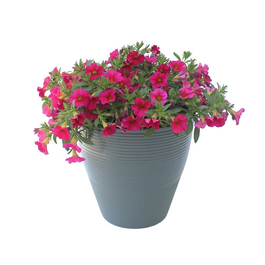 1-Gallon Mixed Annuals Combinations