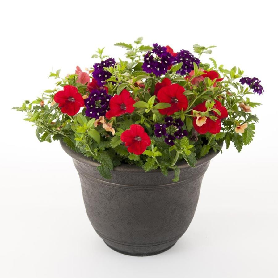 Sierra Calypso Antique Bronze Planter Kit