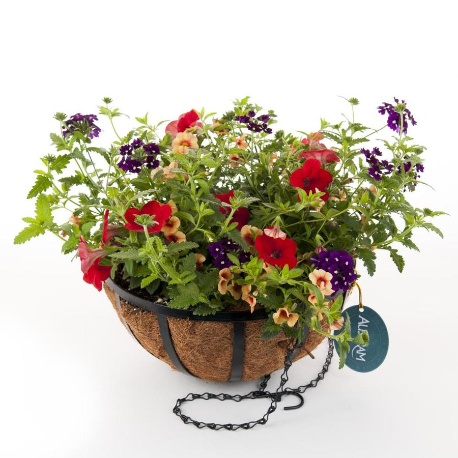 Hampton Calypso Black Wrought Iron Hanging Basket Kit