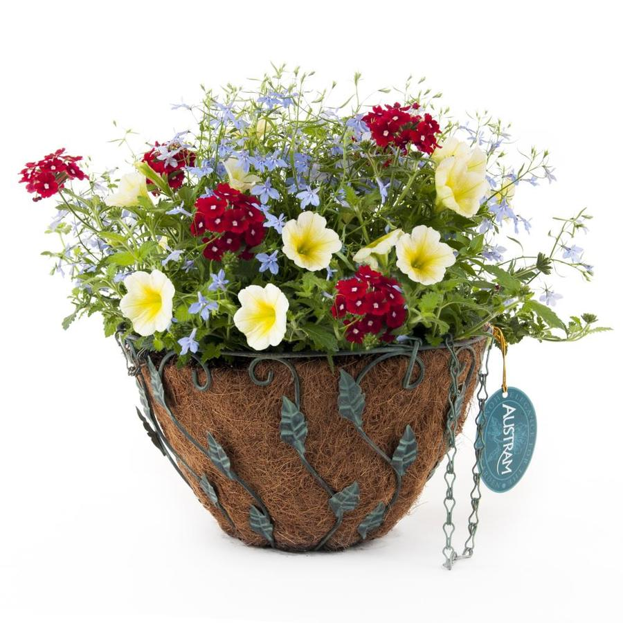 Crescent Water Colours Antique Brass with Patina Hanging Basket Kit