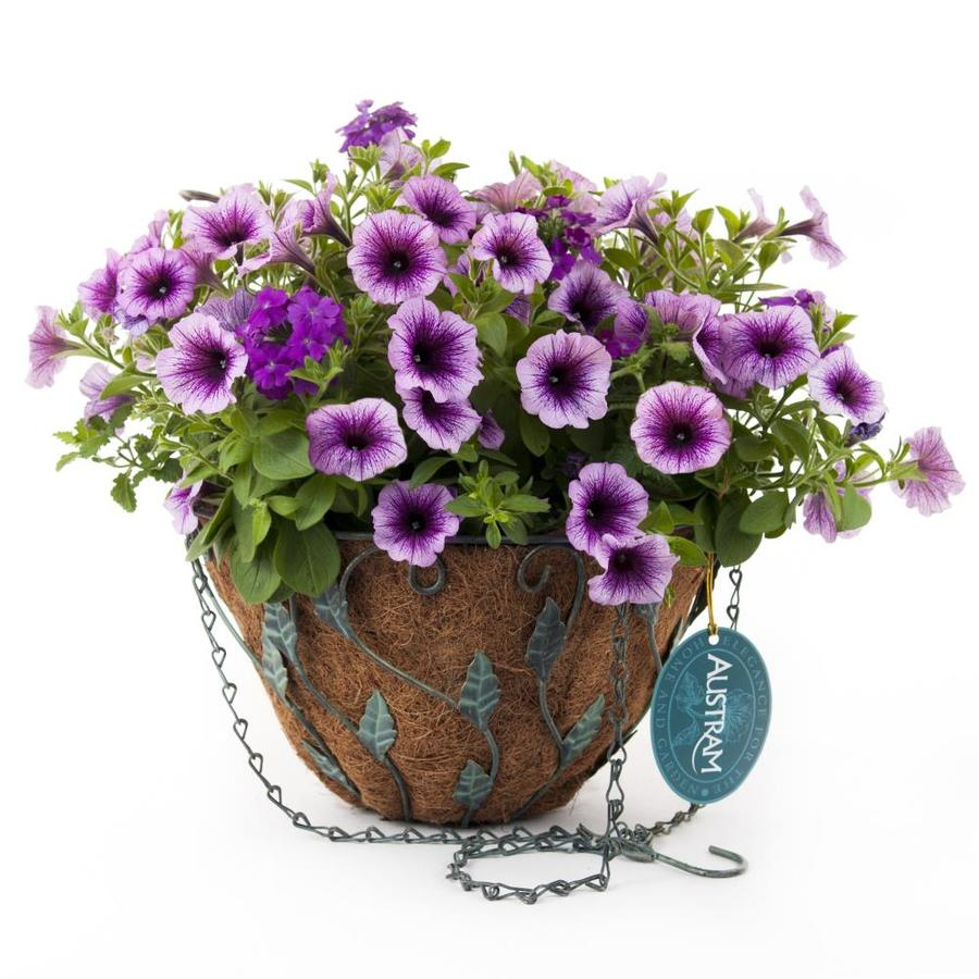 Crescent Purple Cleopatra Antique Brass with Patina Hanging Basket Kit