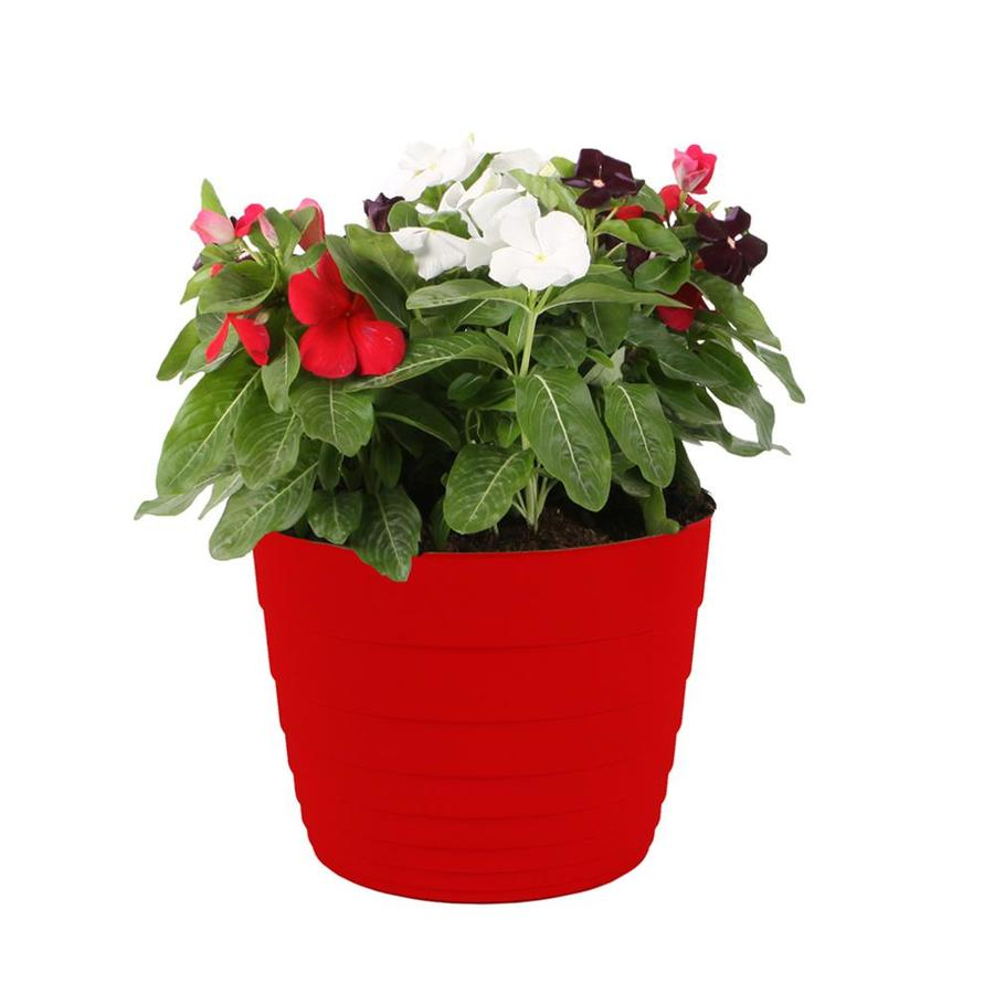 3-Quart Planter Vinca