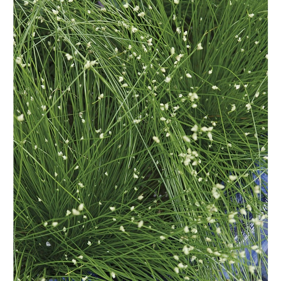 1.5-Gallon Fiberoptic Grass (LW03159)