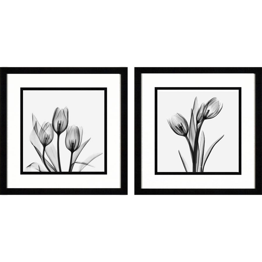 16-in W x 16-in H Photography Prints Wall Art