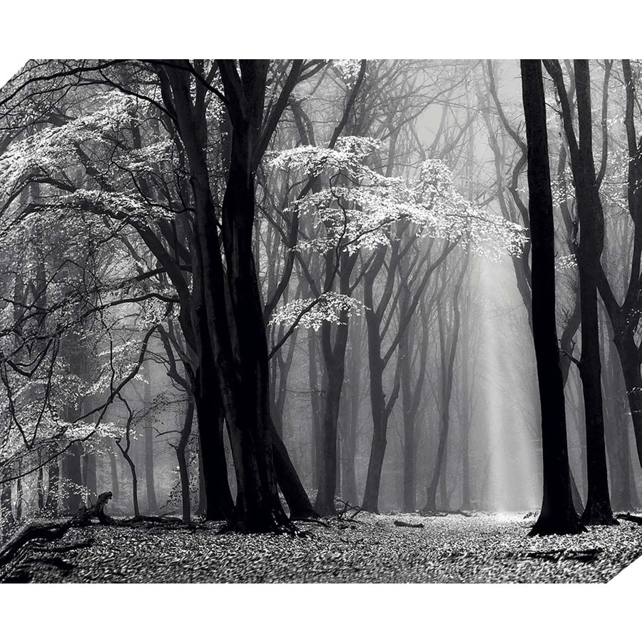 37-in W x 30-in H Frameless Canvas Landscapes Print Wall Art