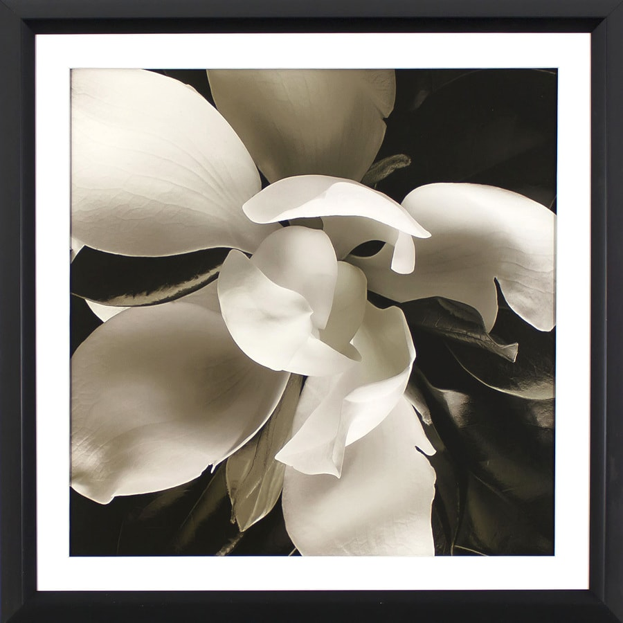 29.75-in W x 29.75-in H Framed Floral Print Wall Art