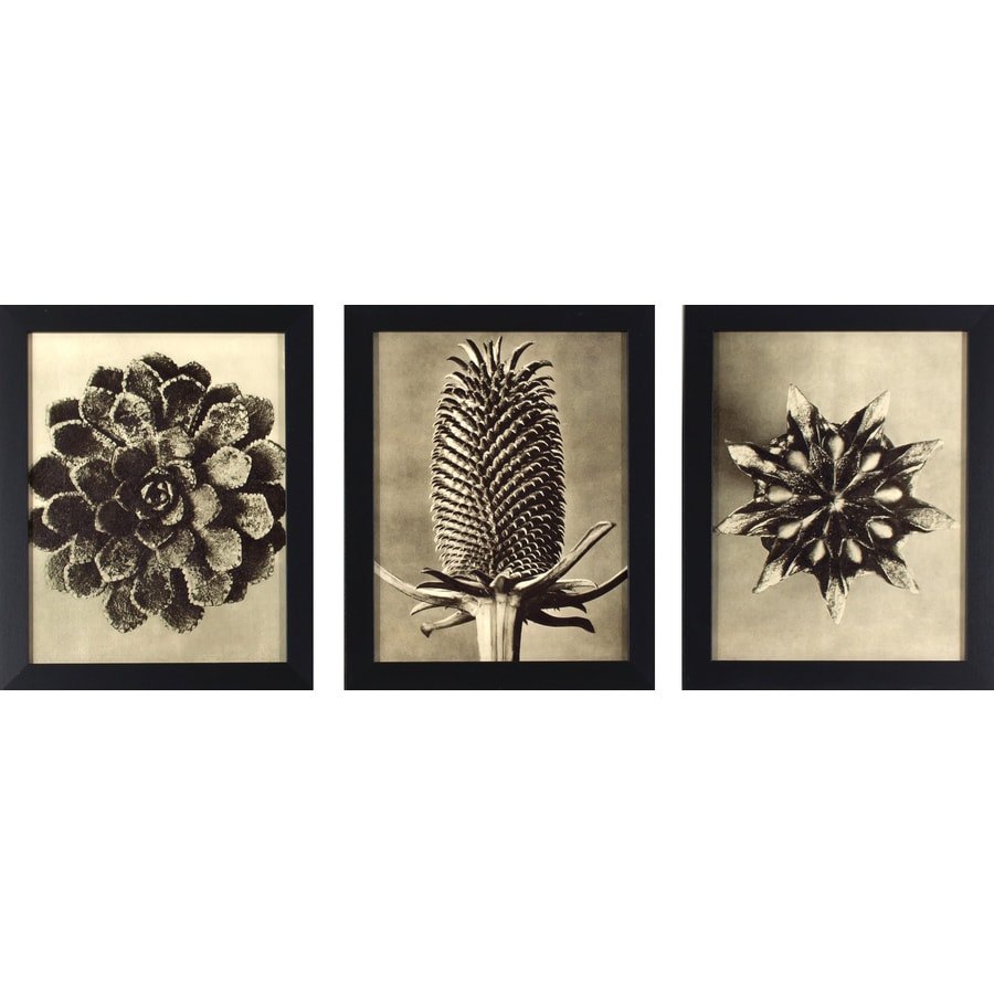 3-Piece 13-in W x 16-in H Framed Garden Print Wall Art