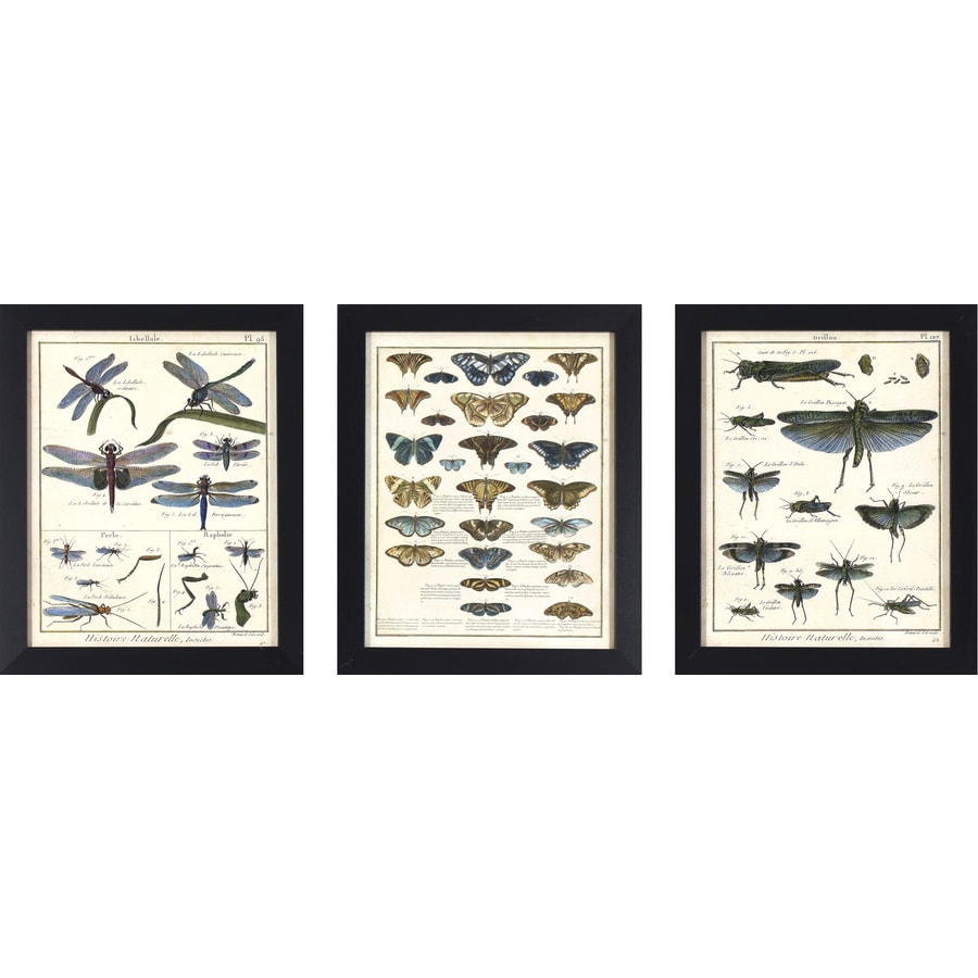 3-Piece 13-in W x 16-in H Framed Plastic Animals Print Wall Art